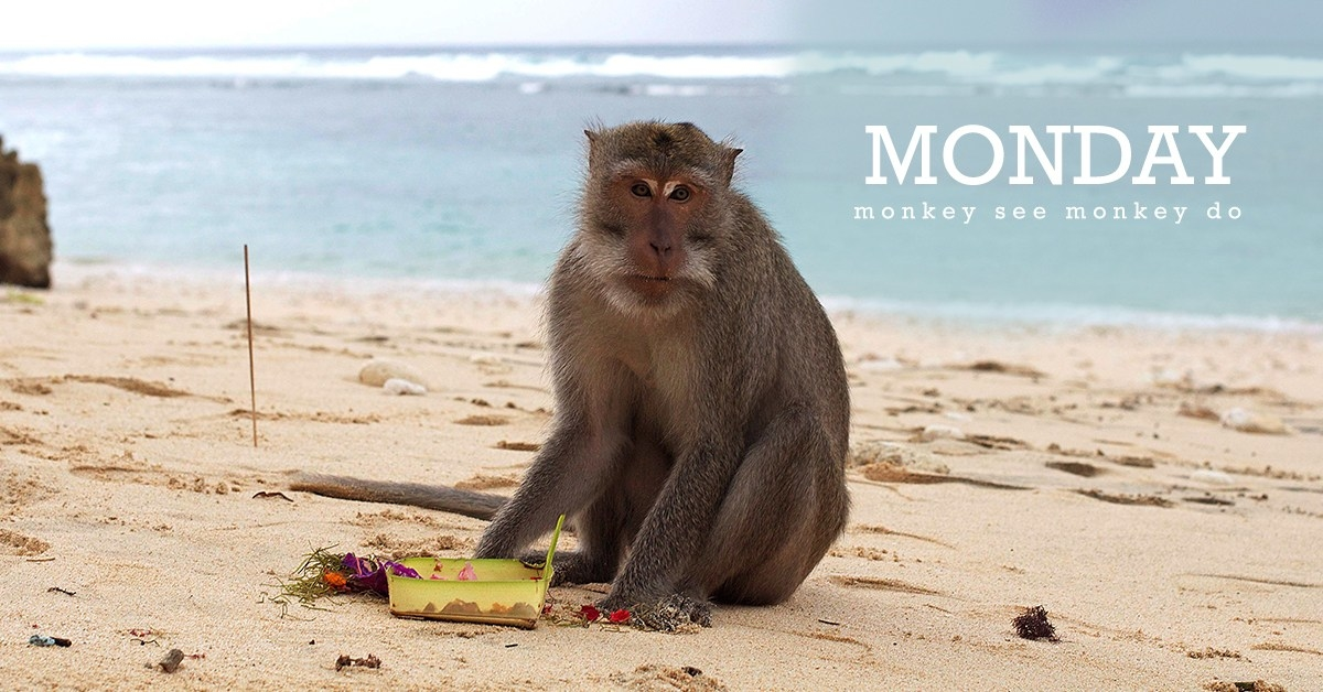 Monday – Monkey See Monkey Do